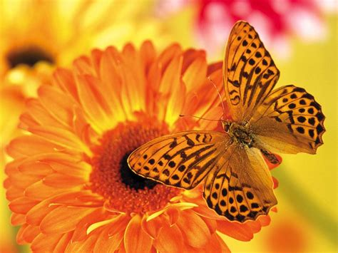 wallpaper for desktop butterfly wallpapers butterfly desktop backgrounds