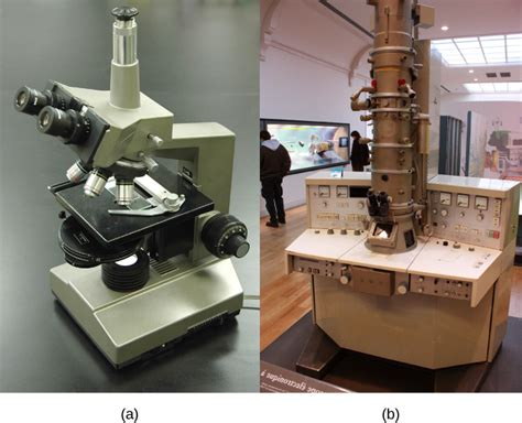 light microscopes can magnify objects up to cells welcome