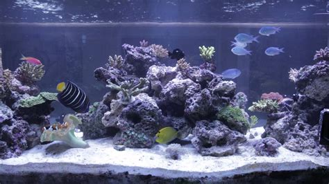 Marine Aquarium Aquascaping by Reef Tank Aquascape