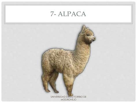 imagenes de animales por la letra v animales con la letra a