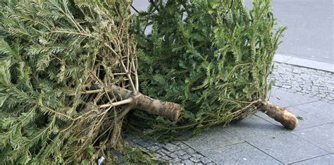 christmas tree pick up for west travis county mud 5 west