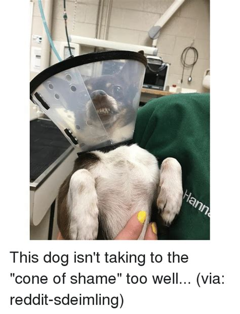 Cone Of Shame Meme - ann this dog isn t taking to the cone of shame too well