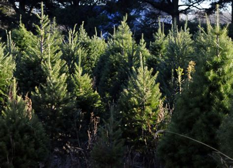 farming christmas in chesterfield feature