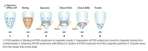 spri bead size selection ure xp how size selection works