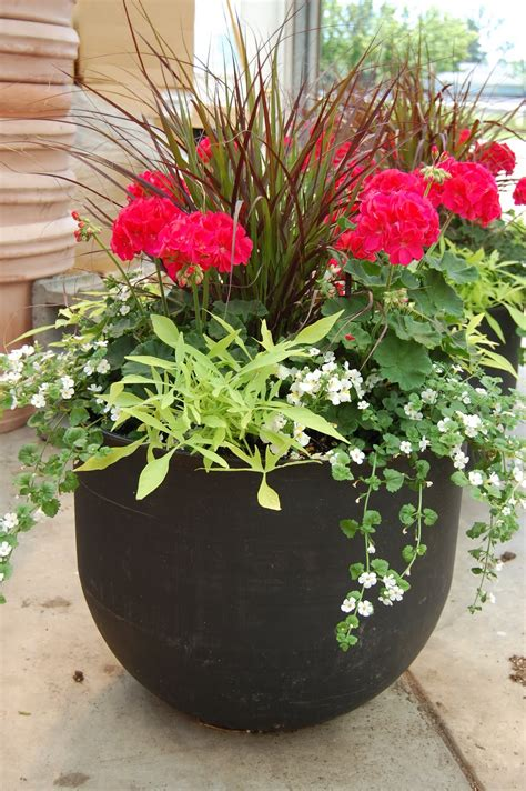 images of potted plant ideas how to plant a patio pot