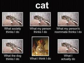 What They Think I Do Meme - cat what society thinks i do funny bobbi s blog