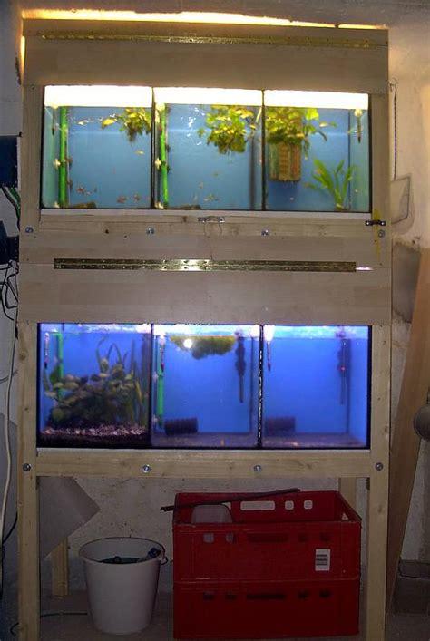 kallax regale miteinander verbinden kleine zuchtanlage f 252 r guppys und marmorkrebse aquarium