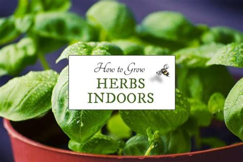 Herbs Indoors | how to grow herbs indoors empress of dirt