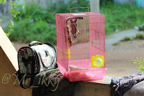 Pasir Zeolit Vs Serbuk Kayu jual sugar glider dan perlengkapan hamster murah jual