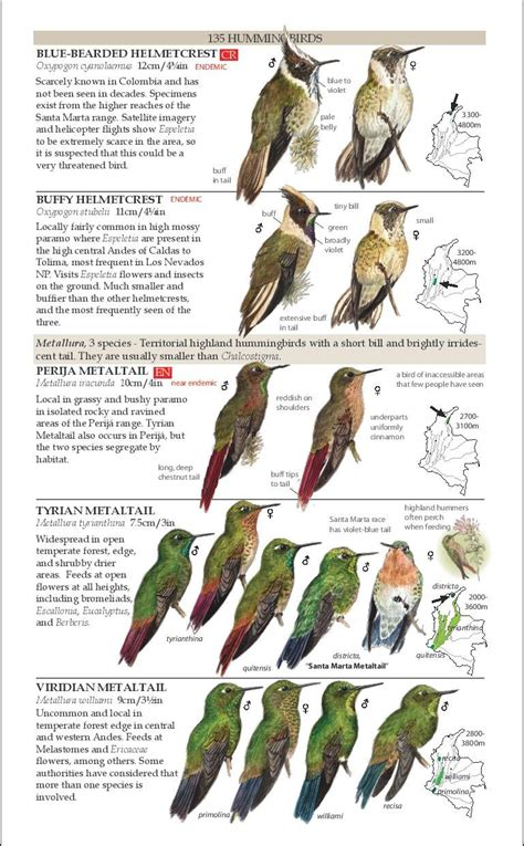 review field guide to the birds of colombia second edition