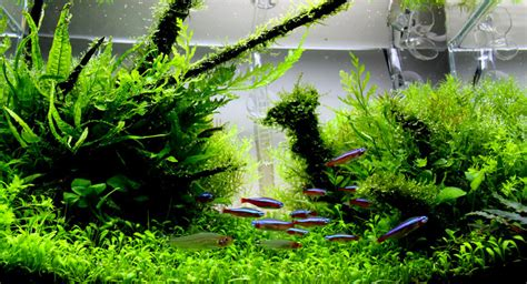 Style Aquascape by 3 Best Aquascaping Styles For Your Aquarium All About