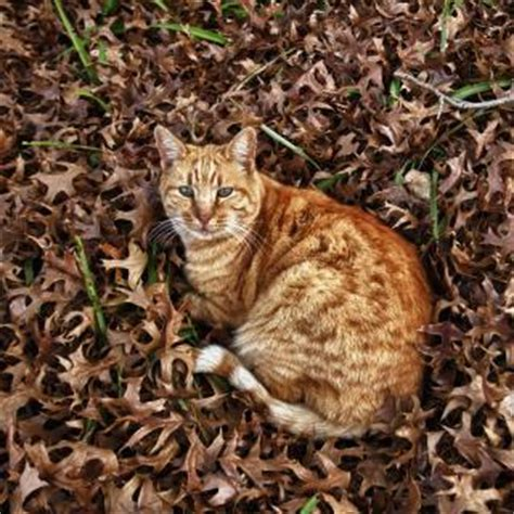 Sho Natur Di Indo autumn cat photo free