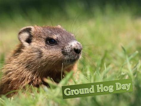 groundhog day fr more free backgrounds for powerpoint presentations