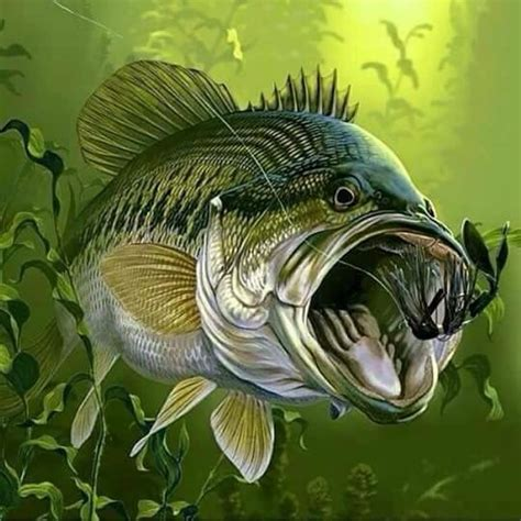 Fisch Bass by 1242 Best Bass Images On Pisces Fish And