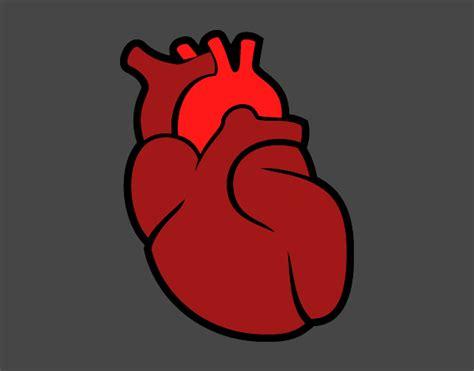 imagenes de corazones del cuerpo humano dibujo de el coraz 243 n pintado por en dibujos net el d 237 a 24