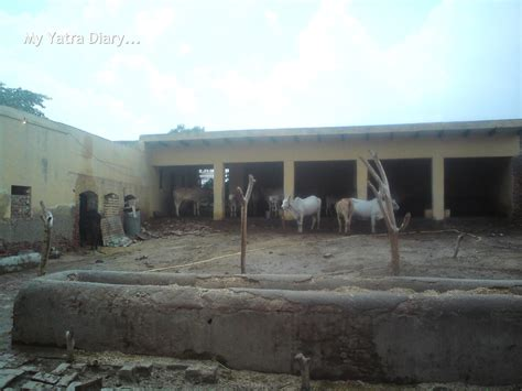 indian cattle shed design modern house