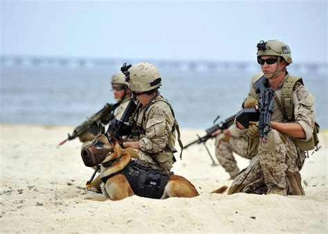 navy seal dogs no navy seal dogs don t titanium teeth wired