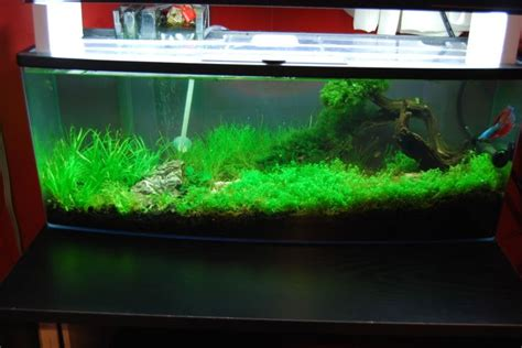 this scape is great tank 6 6 petco bookshelf filtration