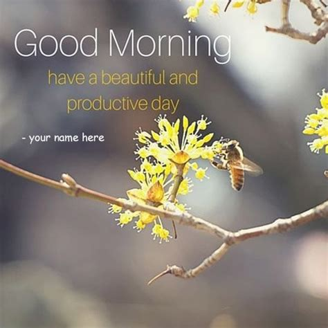 beautiful  productive day quotes  pics