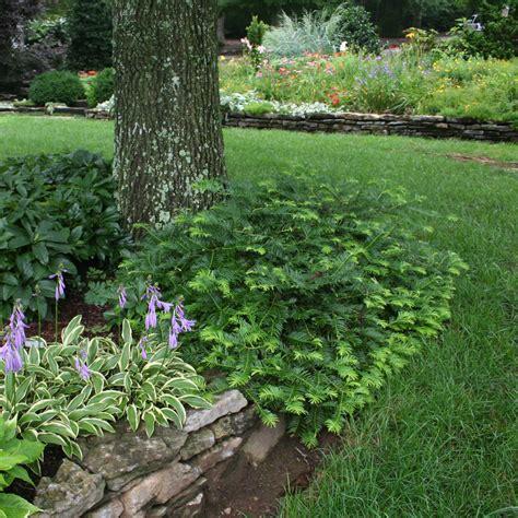 landscaping nashville tn landscape services in nashville tn acer landscape