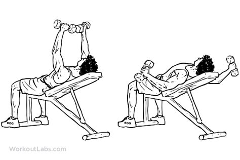 bench press flys incline bench dumbbell fly workoutlabs