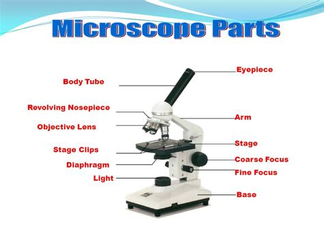 how does a light microscope work how does the lens of a light microscope work