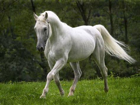 Wallpaper Kuda Cantik | free 3d wallpapers download horse wallpapers