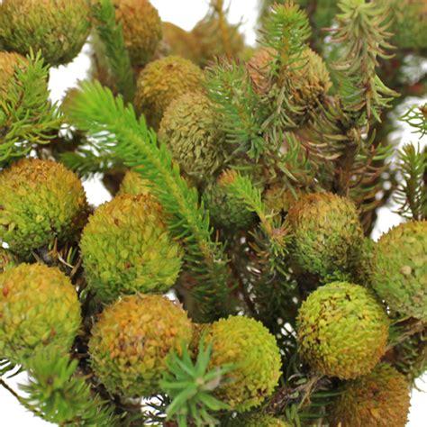 baubles wholesale wholesale berzillia green baubles