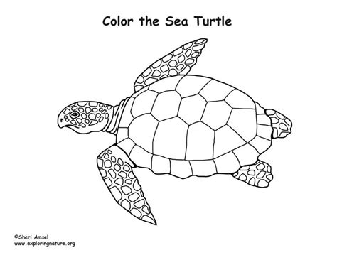 coloring pages of turtles loggerhead sea turtle coloring page