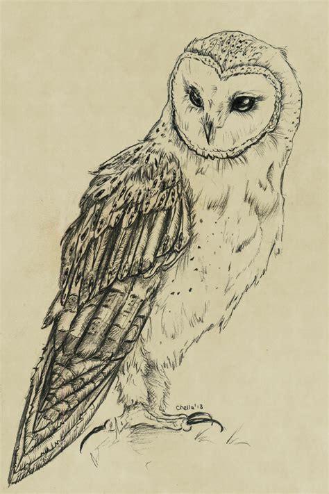Barn Owl Drawing Barn Owl By Veavictis On Deviantart