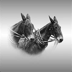 20 mule team borax wikipedia the free encyclopedia 1000 images about 20 mule team borax on pinterest gov t