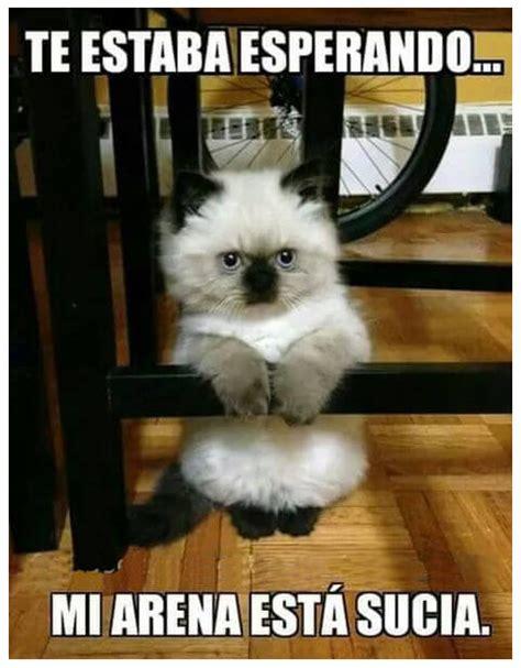 imagenes chistosos de gatos fotos de gatos chistosos y graciosos para facebook png