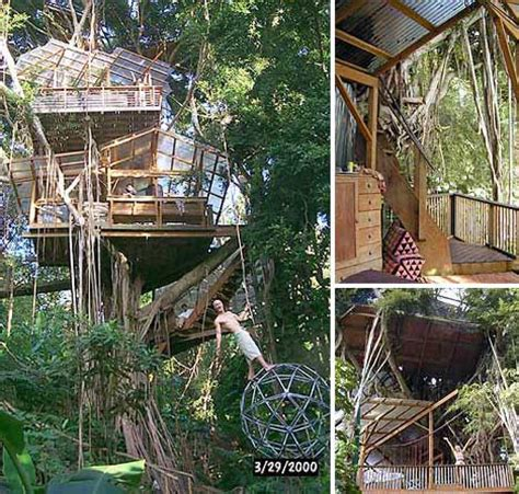 tree houses around the world the best collection amazing tree houses from around the