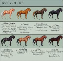 coat color calculator color calculator for horses pictures to pin on