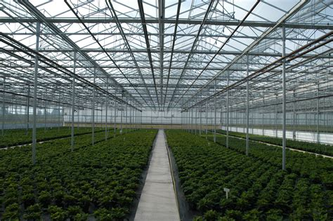 green houses venlo greenhouse glass greenhouses westbrook greenhouse systems