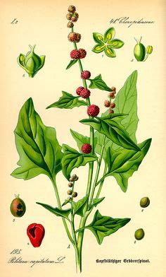 edible paint india 1000 images about botanical on