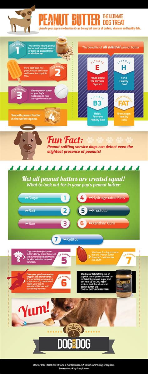 are peanuts bad for dogs can dogs eat peanut butter or is peanut butter bad for dogs