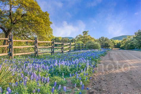 bluebonnet dirt road texas landscapes skyline images