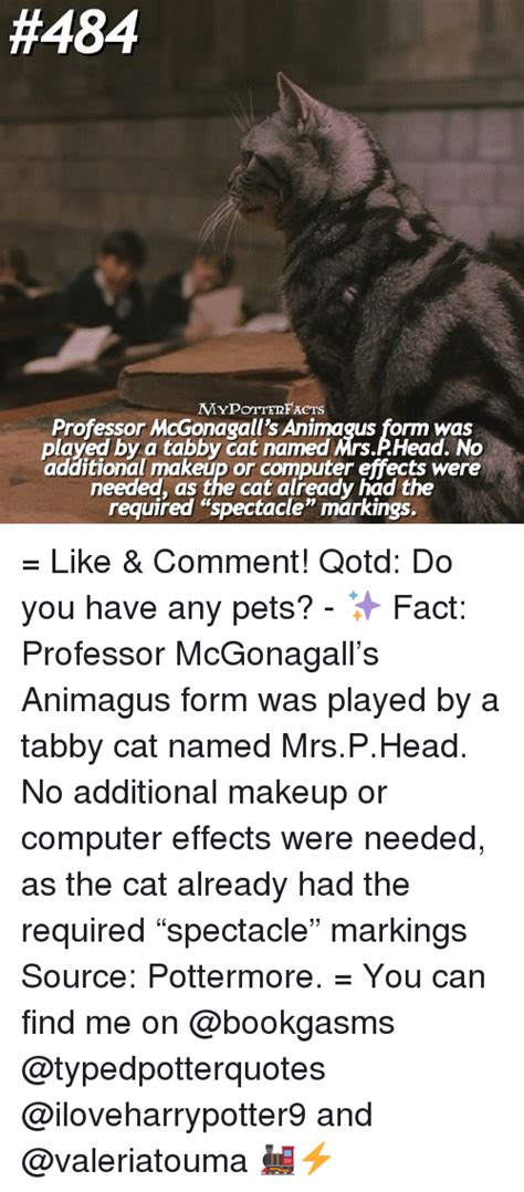 Professor Cat Meme - 25 best memes about professor mcgonagall professor