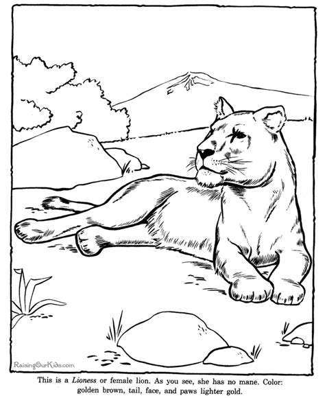 printable zoo animal coloring pictures animal coloring pages to print lioness coloring page to