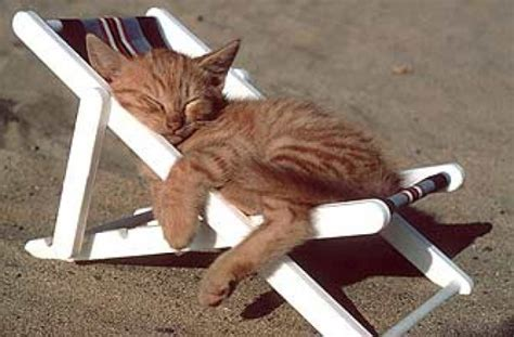Cat On The Chair by 50 Very Funny Sleeping Animal Pictures And Photos