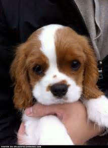 why are small breeds popular anyway get the scoop on