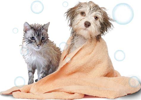 E Para Adocao From The Adoptable Pets Photo Pool by Bem Estar Do Animal Banho E Tosa