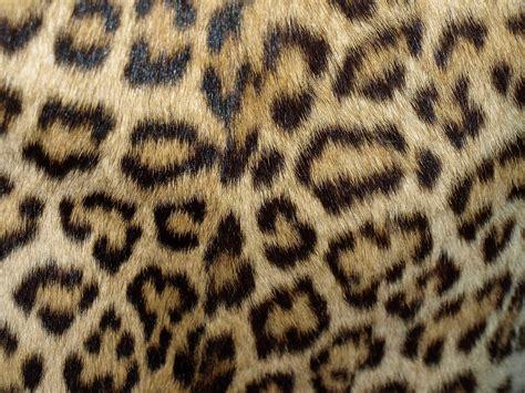furry zebra print wallpaper for walls cheetah fur wallpapers group 35
