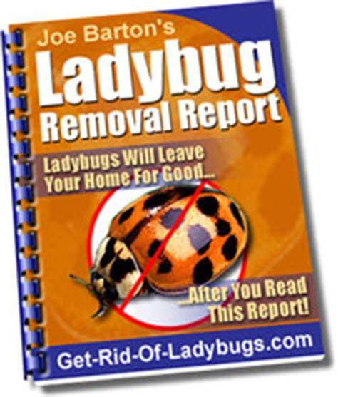 get rid of box elder bugs order the box elder bug
