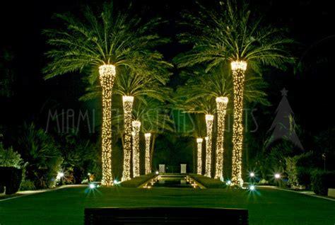 palm tree christmas light net miami lights