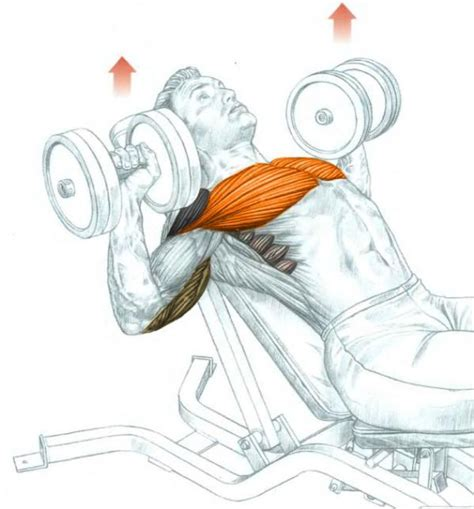 incline bench chest incline dumbbell bench press bodybuilding wizard