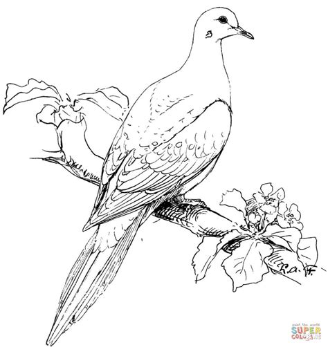 perched mourning dove coloring page free printable