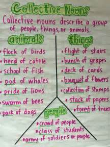 Collective Nouns Stairs by 25 Best Ideas About Collective Nouns On Pinterest