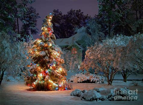 beautiful christmas tree lights photograph by boon mee